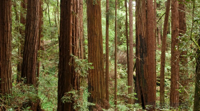 Santa Cruz Action To Protect Our Forest
