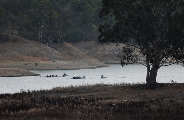 Rowing teams train at Lexington Reservoir in Los Gatos, Calif., Jan. 8, 2014. (Patrick Tehan, Bay Area News Group)