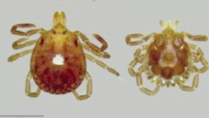New Tick Born Virus Causes Man's Death