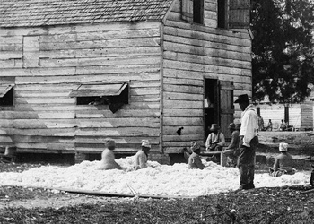 Slaves in South Carolina prepare cotton for the gin in 1862. (Timothy H. O'sullivan/Library of Congress)